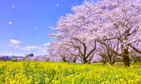 【2019年4月株主優待】高優待利回り(600%以上!!)の『メガネスーパー』を始め3銘柄を選抜
