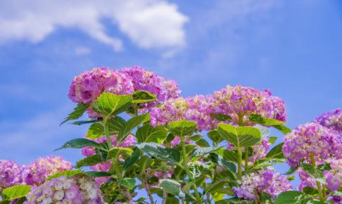 【2019年6月株主優待】人気のすかいらーくHDをはじめ『おすすめ優待銘柄』5選を紹介!